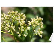 Green and Gold Striped Fly Poster