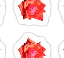 Orange Rose Sticker