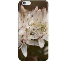 Calytrix in the Wet iPhone Case/Skin