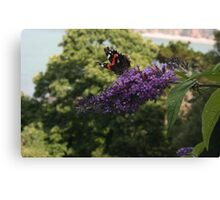 Red Admiral on rose bay willow herb flower  Canvas Print