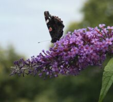 Red admiral on rose bay willow herb, Exmoor backdrop Sticker