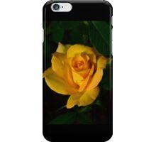 First yellow rose of the season iPhone Case/Skin