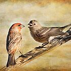 Male and Female House Finch by Barbara Manis