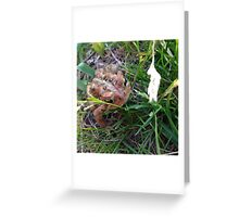 Hello Toad! Greeting Card