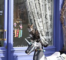 Cat with unicorn in front of hair salon in Paris  by Pzycho