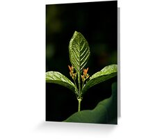 Tripzoid Plant Greeting Card