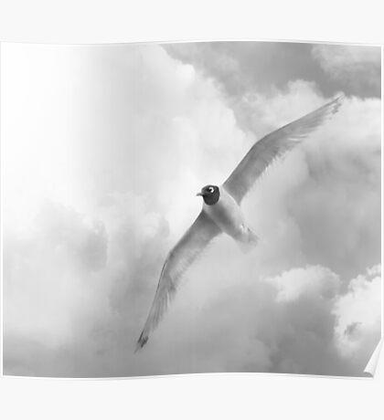 "Franklin's Gull alias ""Prairie Dove"" - BW Poster"