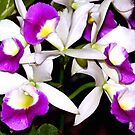 Purple and white pond orchids by ♥⊱ B. Randi Bailey