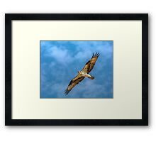 Osprey Shot Framed Print