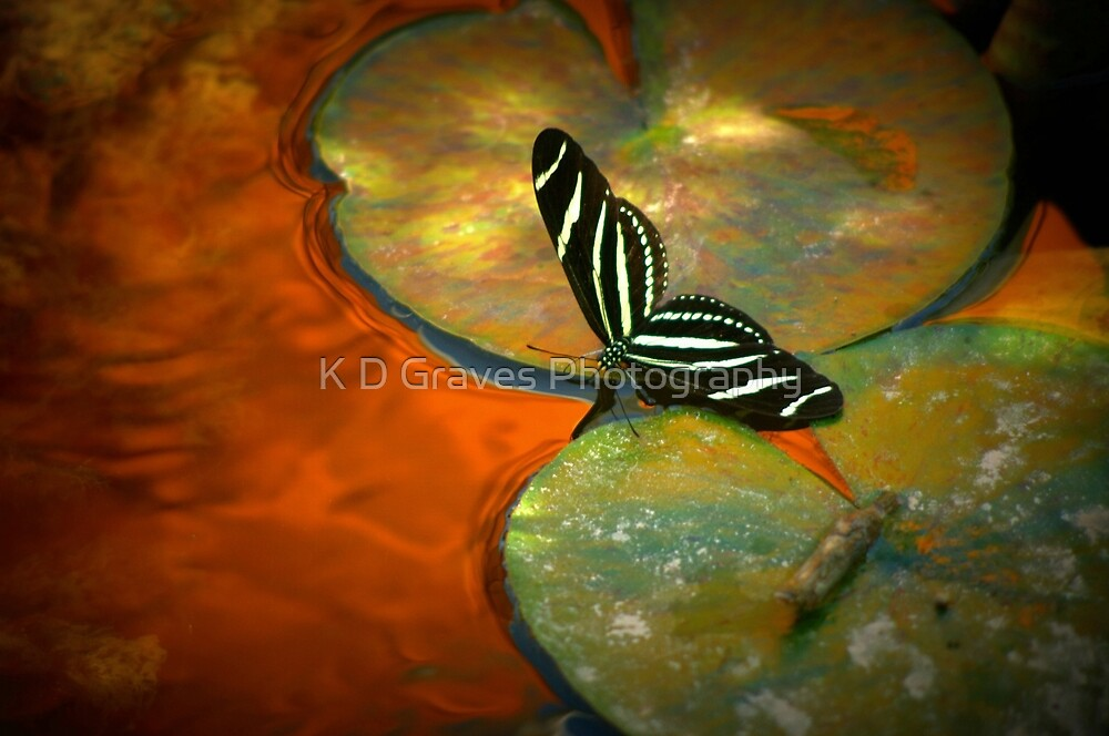 Liquid Gold by K D Graves Photography
