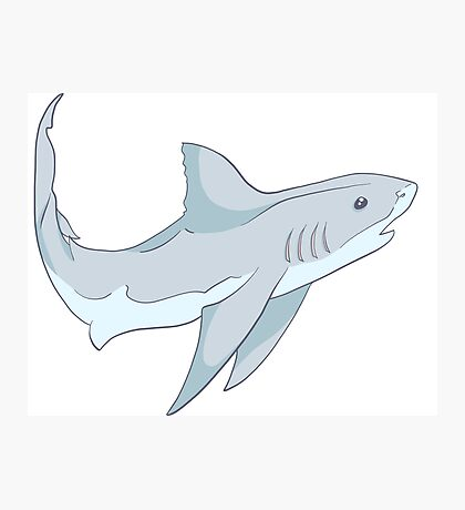 Curious Cute Grey Shark Photographic Print