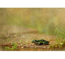 Frosch Photographic Print