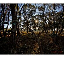 Frosty and Foggy Morning at Macgregor Nature Reserve (ACT/Australia) (17) Photographic Print