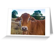 Mooooooooooooooooooo Greeting Card