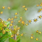Araneus diadematus spiderlings by relayer51