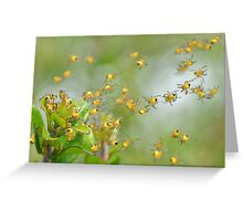 Araneus diadematus spiderlings Greeting Card