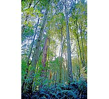 Light through the Trees - Great Otway National Park Photographic Print