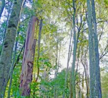 Light through the Trees - Great Otway National Park Sticker