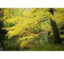 Alfred Nicholas Gold -2835 Photographic Print