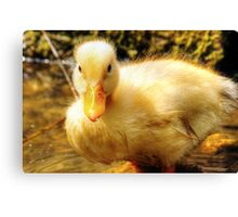 Yellow Duckling Canvas Print