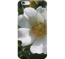 Dog Rose iPhone Case/Skin
