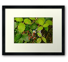 Bramble Patch Framed Print