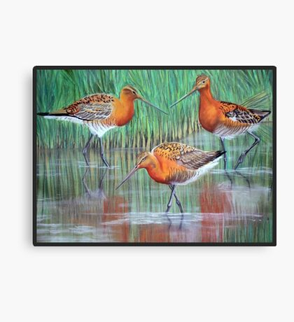 Black-tailed godwits pastel painting Canvas Print