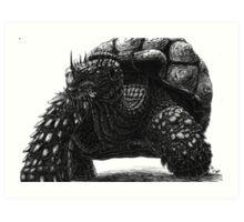 A Tortoise Art Print