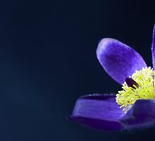 Blue Flower by Colin Shanley