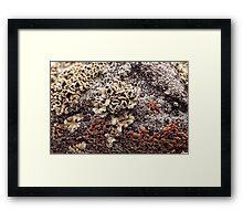 New Mexico Lichen on Desert Rock #1 Framed Print