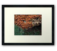 Macro of New Mexico Lichen on Desert Rock #2 Framed Print