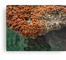 Macro of New Mexico Lichen on Desert Rock #2 Metal Print
