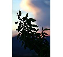 Plant Sunset Silhouette #3 Photographic Print