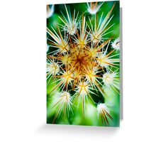 Cactus closup with needles Greeting Card