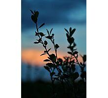 Plant Sunset Silhouette #5 Photographic Print