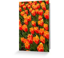 A World of Tulips Greeting Card