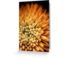 Petal burst Greeting Card