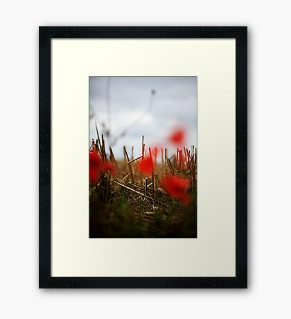 SL-WEEK 26: DOF Framed Print