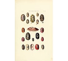 Thesaurus conchyliorum Monographs of genera of shells George Brettingham Sowerby 1887 V1-V5 351 Photographic Print