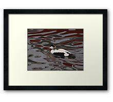 Graphic Eider Duck Framed Print