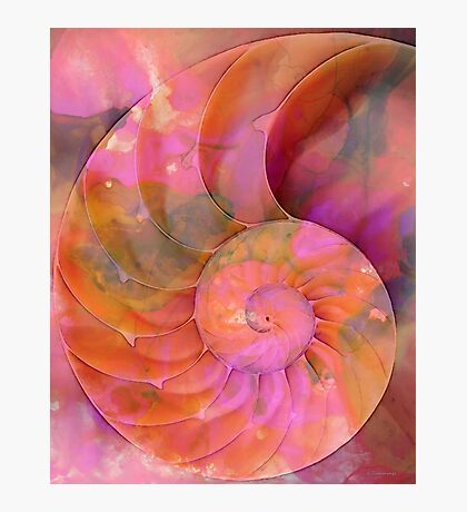 Colorful Nautilus Shell By Sharon Cummings Photographic Print