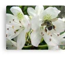 Pollen Packing Bumble Bee Metal Print
