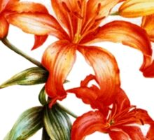 Orange Asiatic Lily Sticker