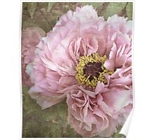 summertime peony Poster