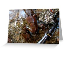Huge New Claws Greeting Card