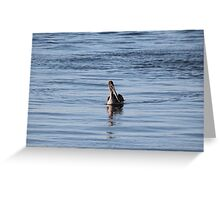 Gliding into Harbor Greeting Card