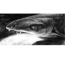 Sarcastic Shark Photographic Print