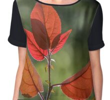 Fresh Leaves In Spring Chiffon Top