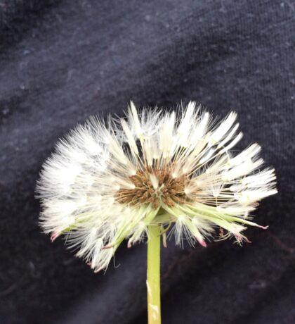 Wet Dandelion Fluff Sticker