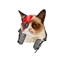cat david bowie Photographic Print